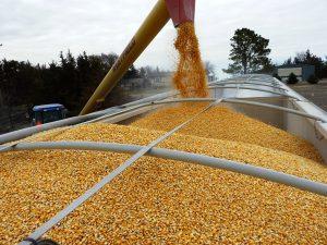 Перспективы лицензирования экспорта зерна